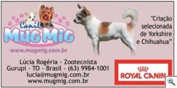 Anúncio Cães e Cia - Chihuahua