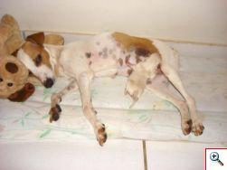 Capitu morreu alguns meses após o parto. O filho mora com Anny e é muito amado. Ted