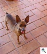 Pingo, presente de minha amiga Louise, qdo morávamos em Alfenas.